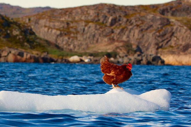 instagram travel sail boat pet chicken