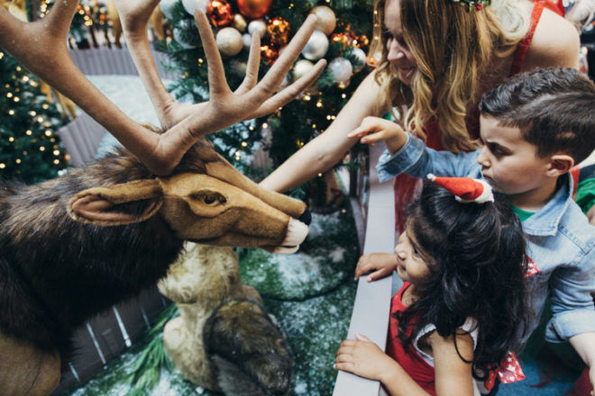 patting reindeer at Northland shopping centre