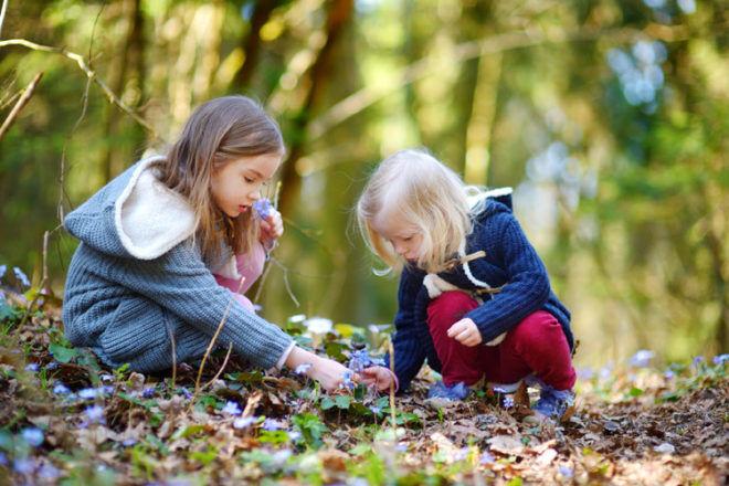 autumn nature collecting kids