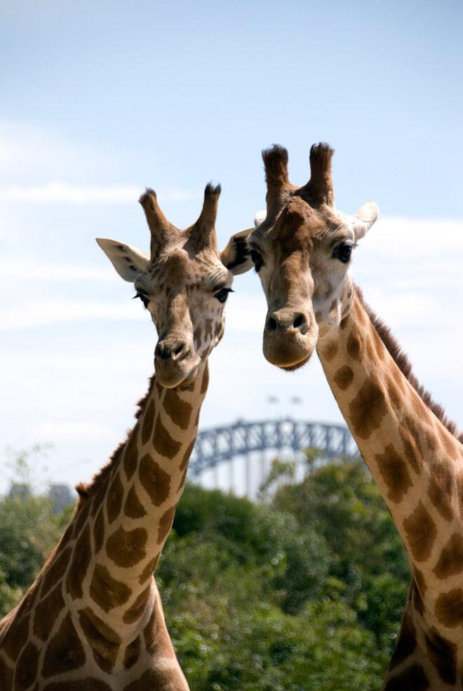 sydney school holiday activities 2017 taronga zoo