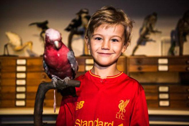 sydney school holidays australian museum