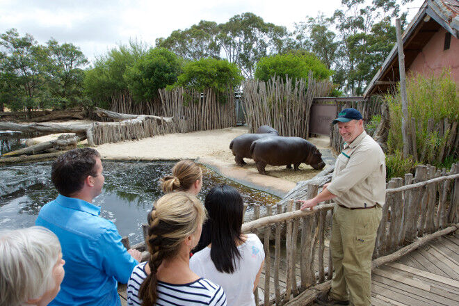 school holiday activities things to do Melbourne zoo