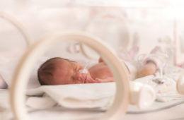 premmie baby in humidicrib
