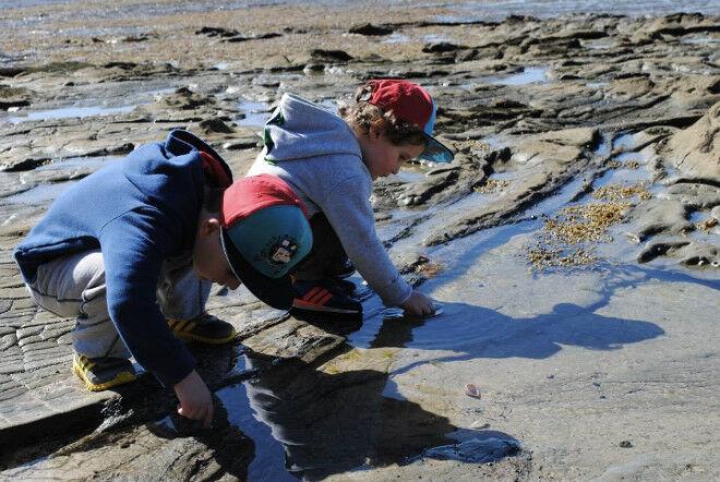 rockpooling Bunurong Marine Park Gippsland Victoria