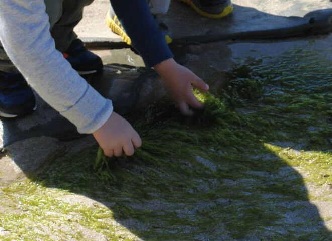 rockpooling in Australia with kids