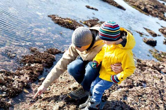 best places for rockpooling in Australia with kids