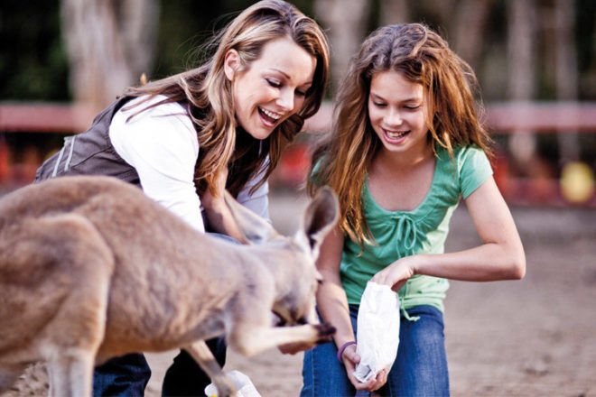 Currumbin Wildlife Sanctuary feeding kamgaroos