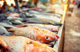 Fresh fish at market - pregnancy food aversions