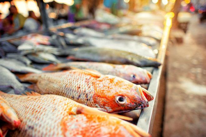Fresh fish at market - pregnancy food aversions