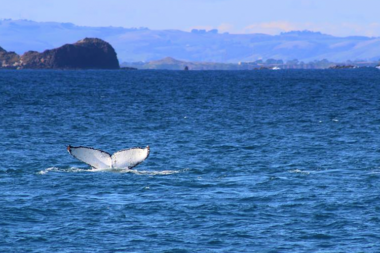 Philip Island Whale Festival