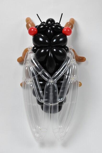 Masayoshi Matsumoto - cicada