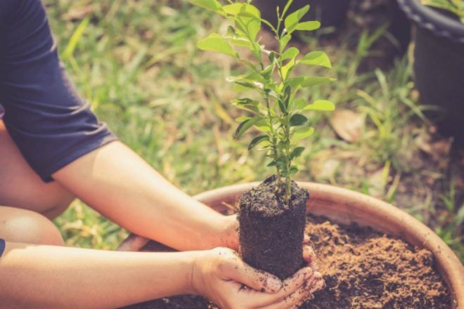 planting a tree on top of placenta