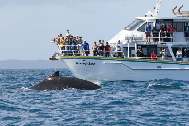whale watching off boat on phillip island