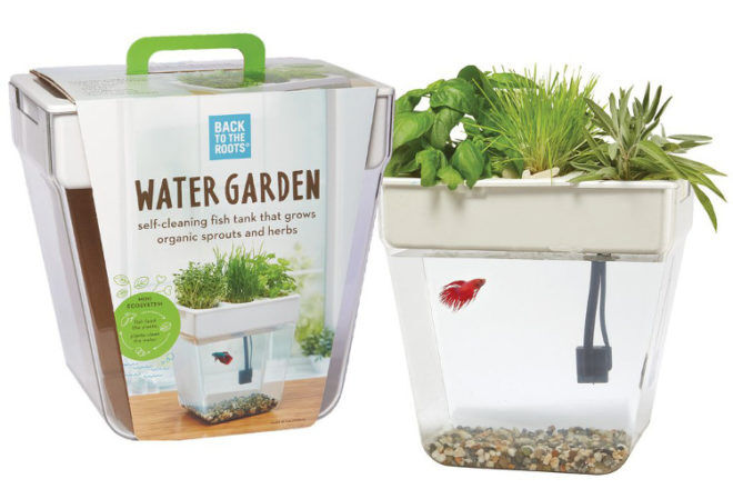 BAck to Roots Water Garden 2.0 fish tank