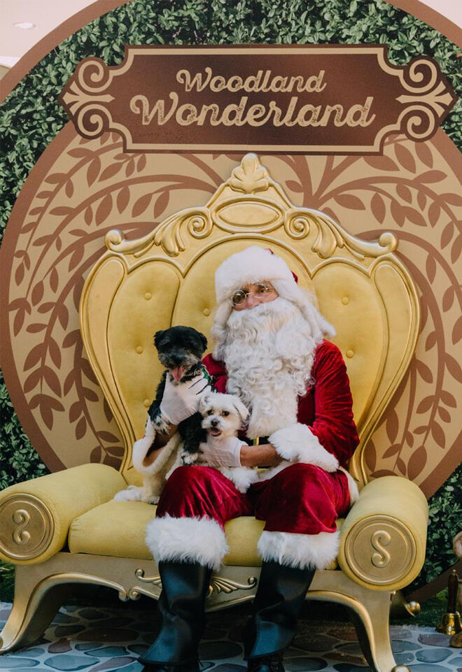 Northland Santa's Wonderland pet photos