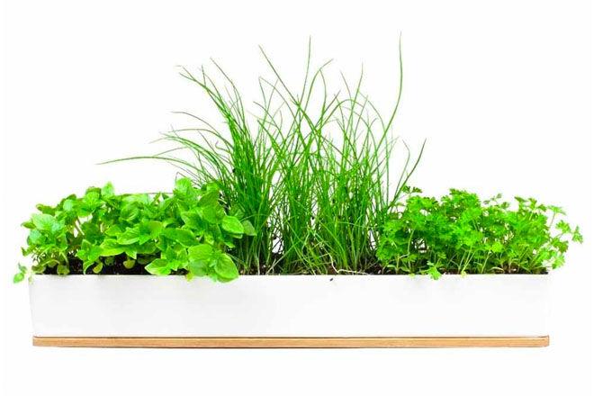 Urban Greens MicroHerbs Window Sill Kit