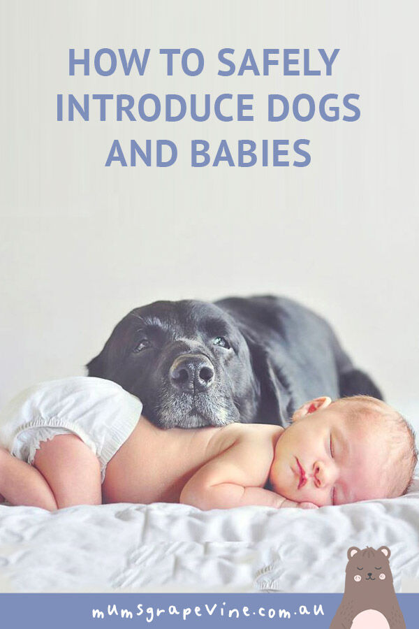 How to safely introduce dogs and babies