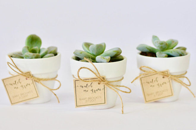 Baby Shower Favours succulent