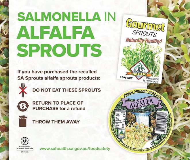 Alfalfa spouts salmonella outbreak