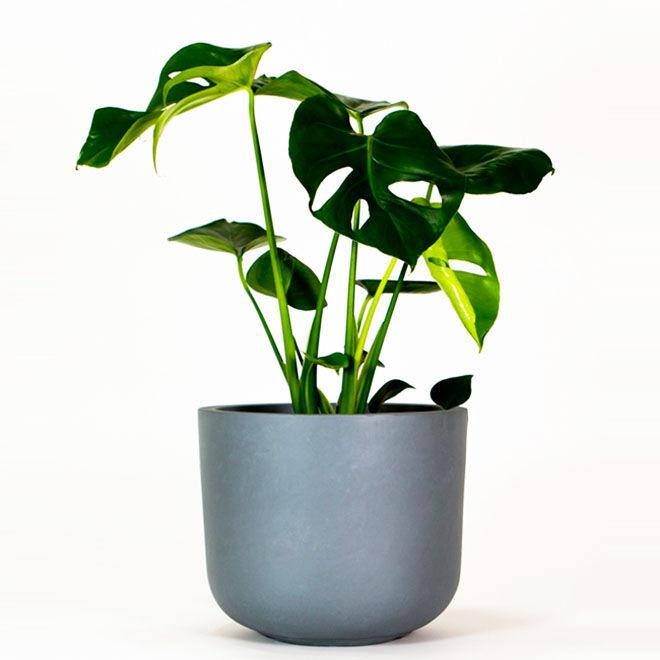 Buddy Pot, plant pot