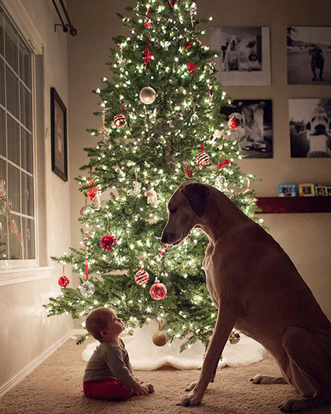 Baby's first Christmas photo with family dog