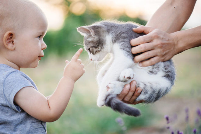 Prepare your cat for life with a baby | Mum's Grapevine