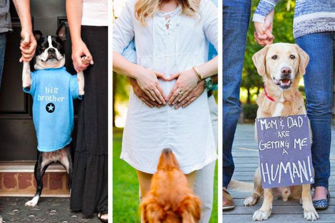 28 dog pregnancy announcement ideas | Mum's Grapevine